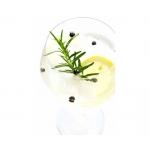 Mix cu 4 condimente - 25g - Gin&Tonic Botanicals