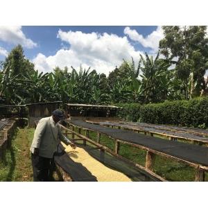 Cafea verde BS - KENYA Slopes of 8 (Kirinyaga) AB outturn 21KB1017 250g