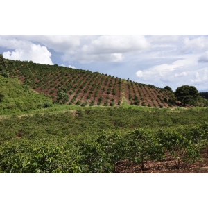 Cafea verde BS - TANZANIA Acacia Hills - experimental washed Kent 2019 1KG